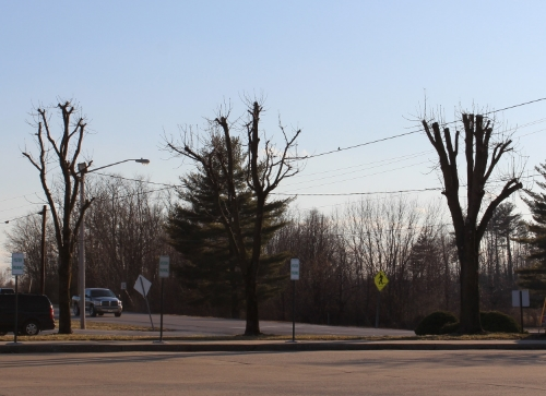 Topping is  NOt  a proper method of pruning. This leads to many problems in the future: storm damage, insect attack, tree decline and death. Often this practice is more expensive than proper pruning over the long term. Think twice before having this done to your tree! Do your homework!