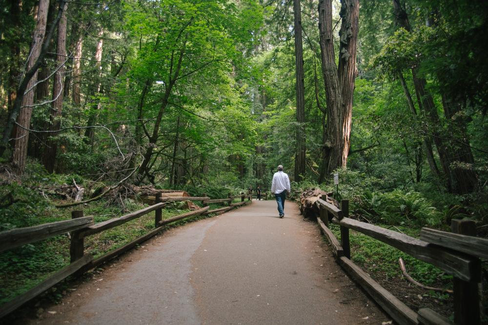 Walking through Muir Woods