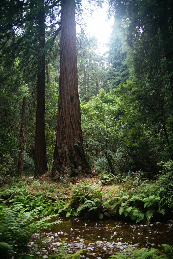 Inside Cathedral Grove