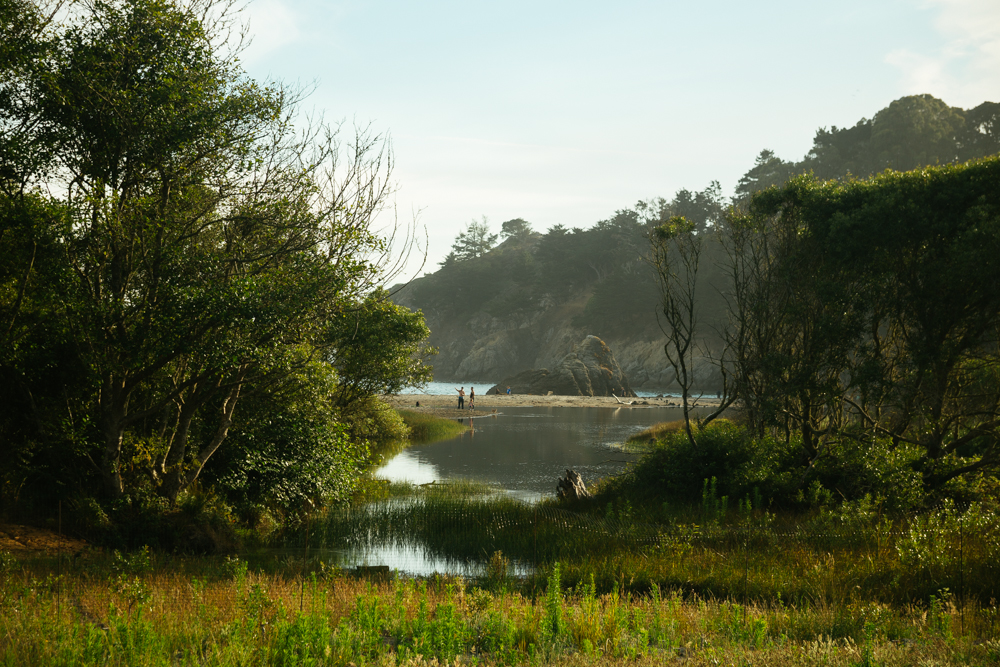 The wetlands area of Muir Beach