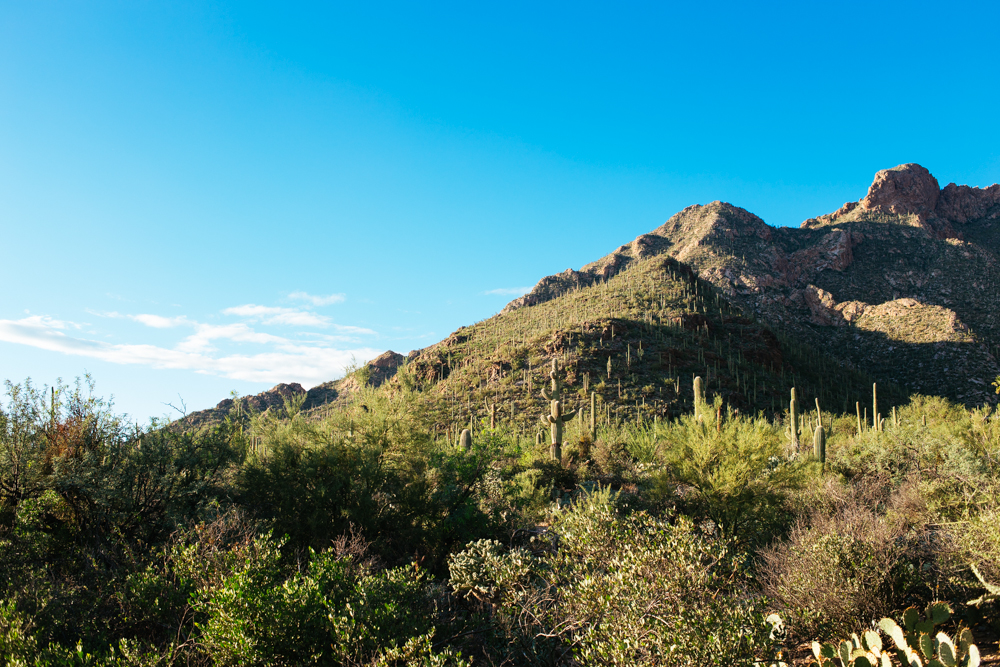 The edge of the Catalina Foothills on the Eastern side of Tucson, AZ.
