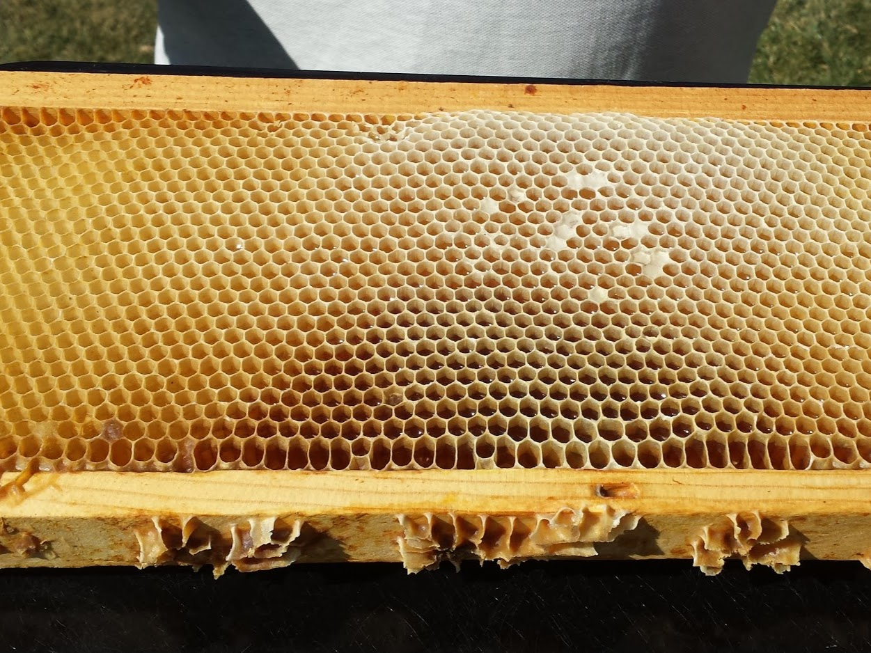 Frames with Bee wax and honey