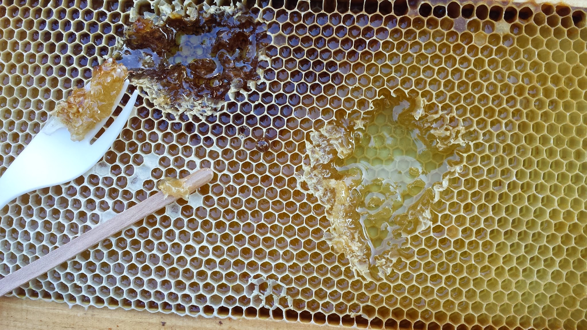 Different colors of honey from various flowers