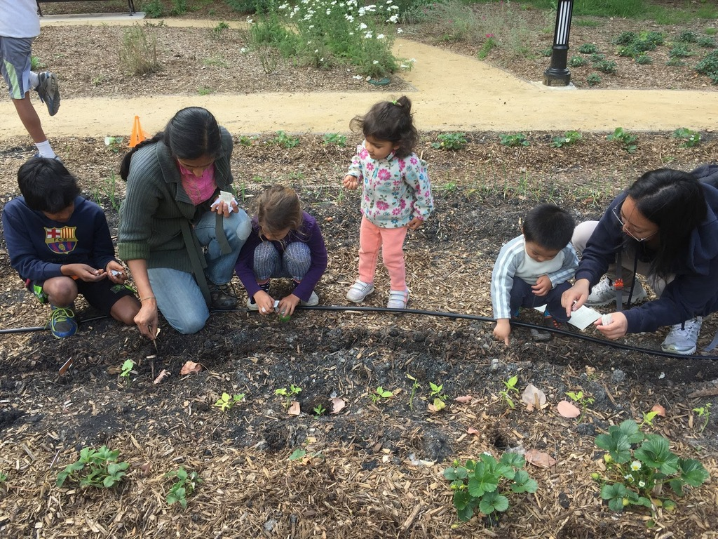 The kids planted gold rush beans, asian long beans, sunflowers and are experimenting with direct seeding some melons this early in the season.