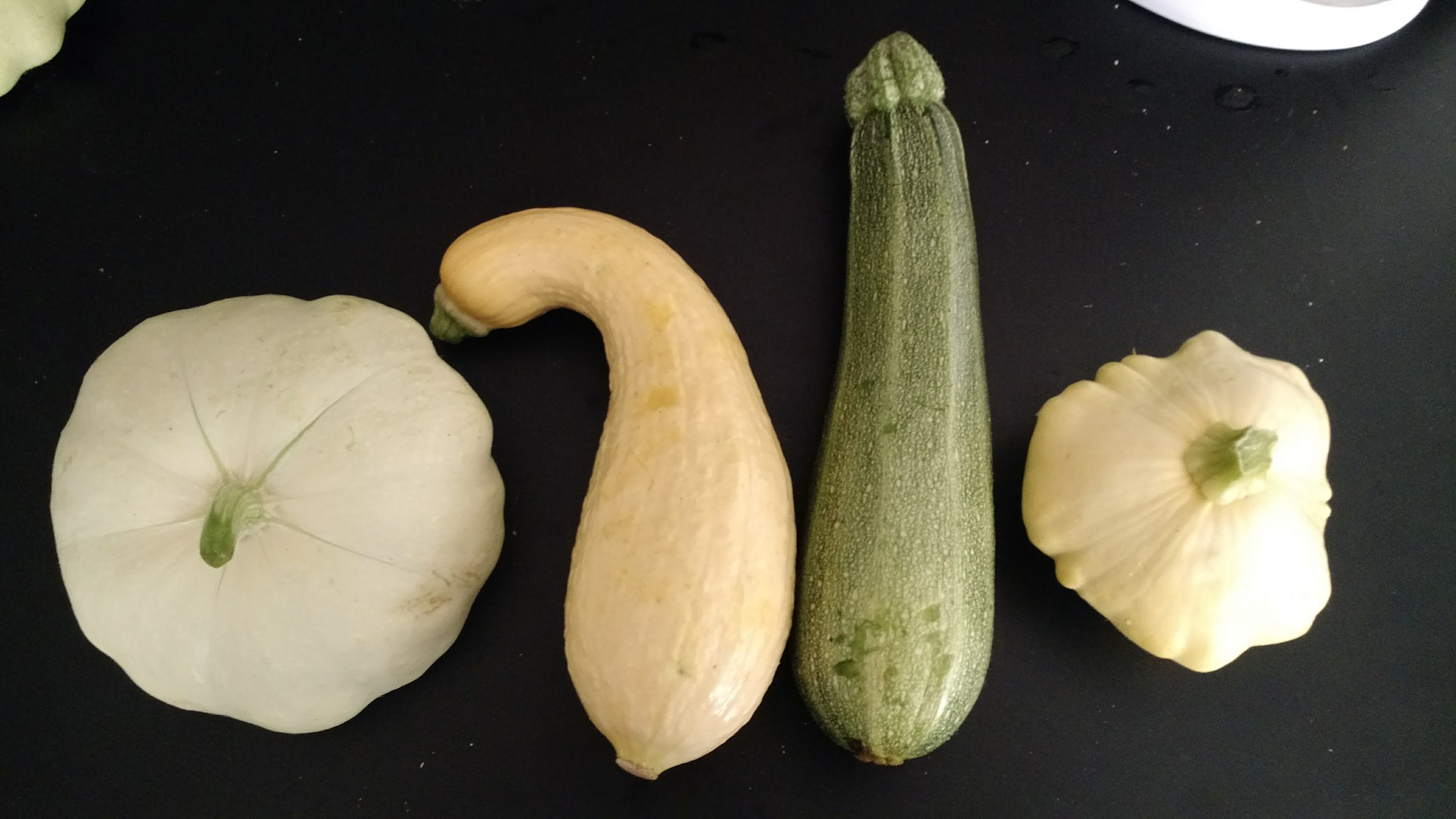 From Left to right:  Green Patty Pan, Yellow Crookneck, Zucchini (marrow, courgette), Yellow Patty Pan