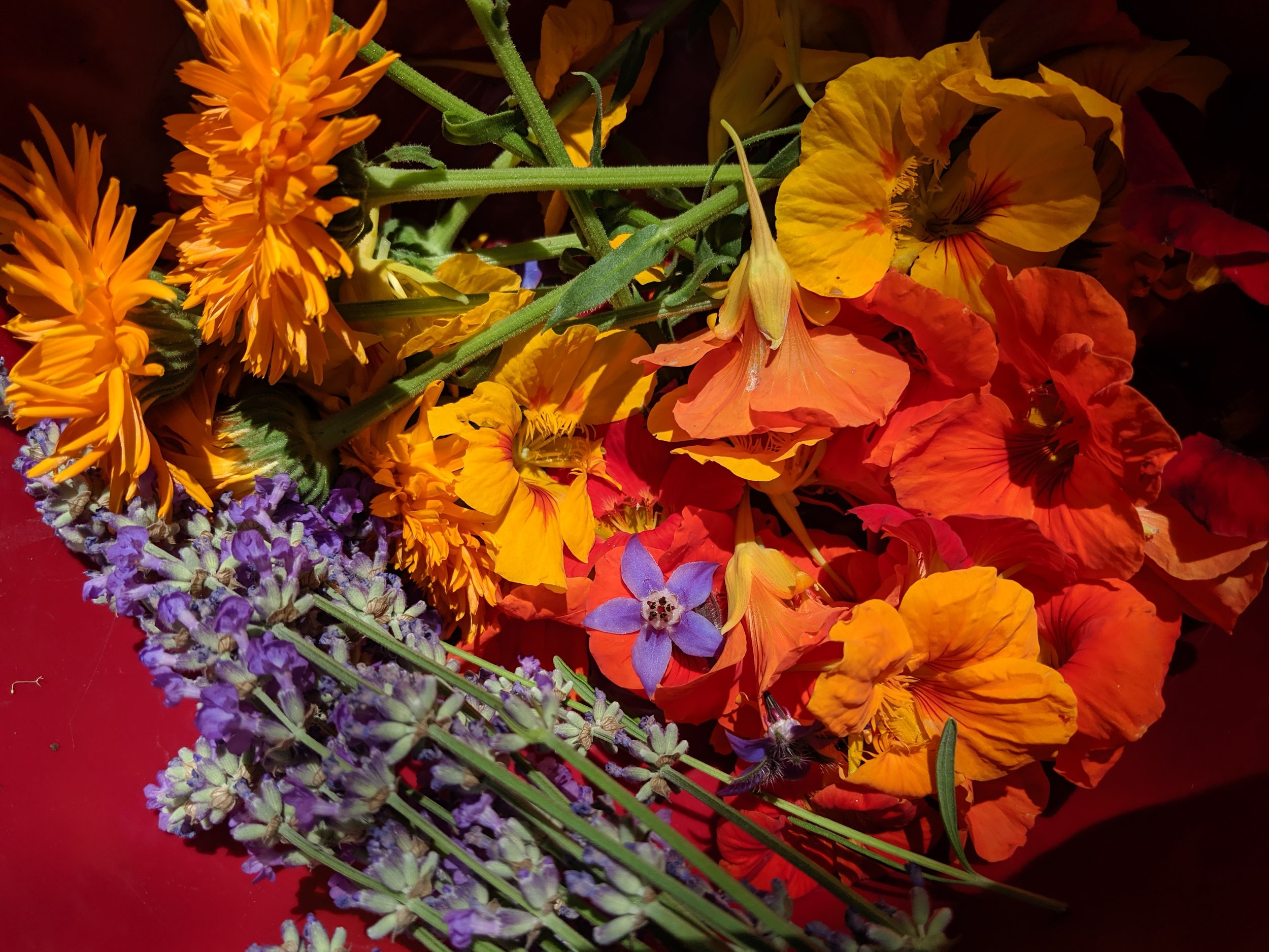 In this photo (clockwise from upper left): Calendula, Nasturtium, Borage, Lavender