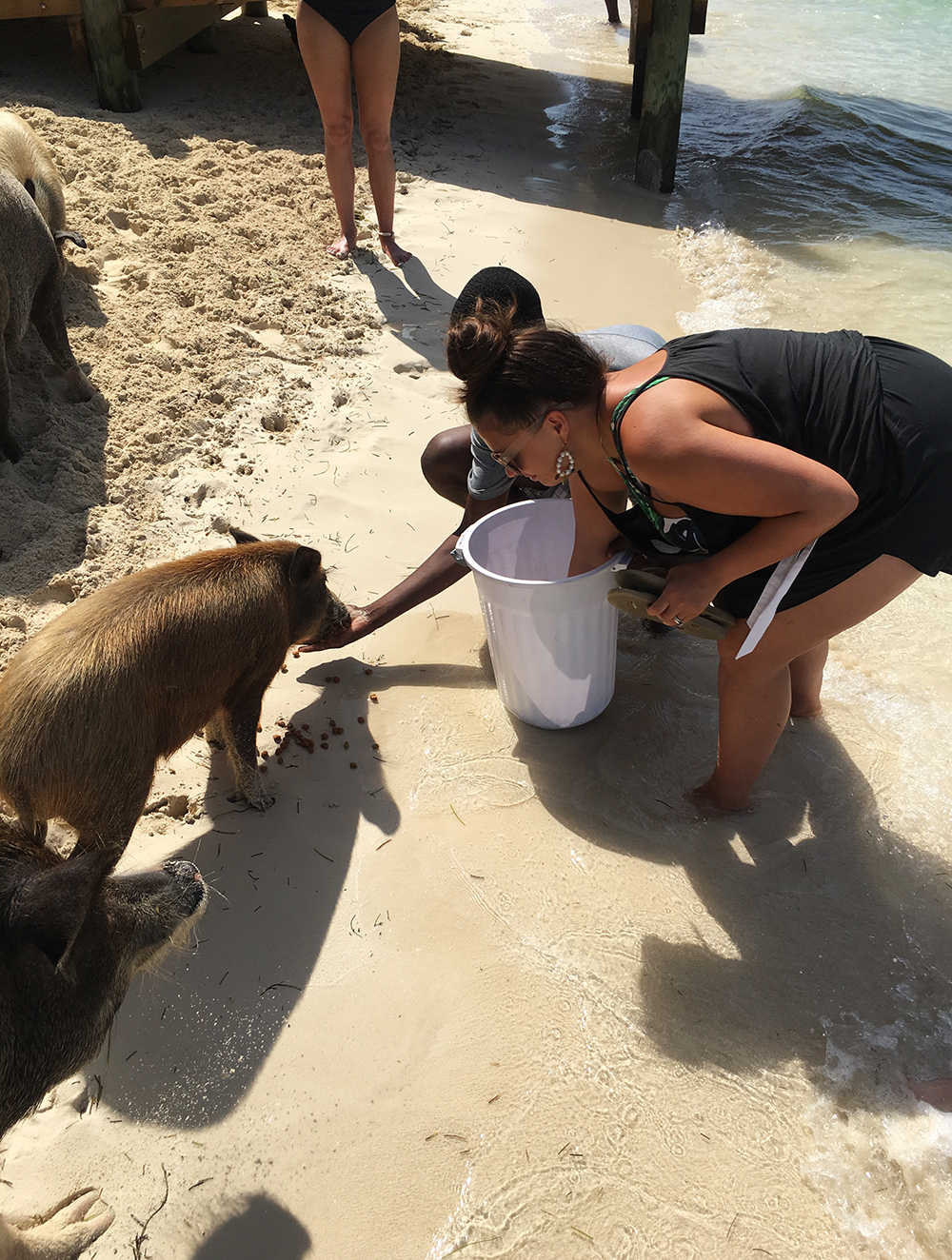 feeding the pigs in the bahamas exumas swimming pigs