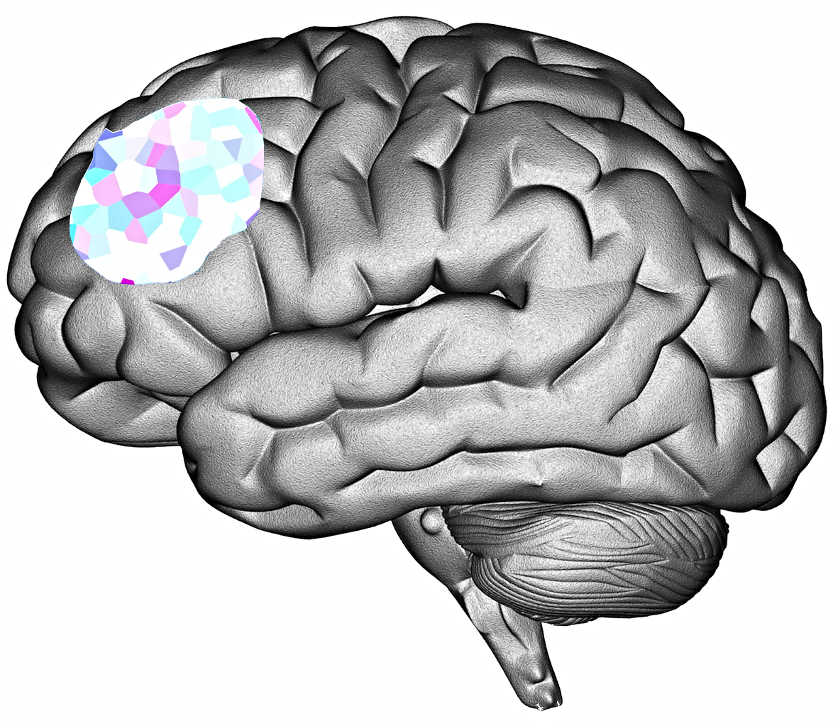 Dorsolateral prefrontal cortex as featured in Brand Psychology book by Jonathan Gabay