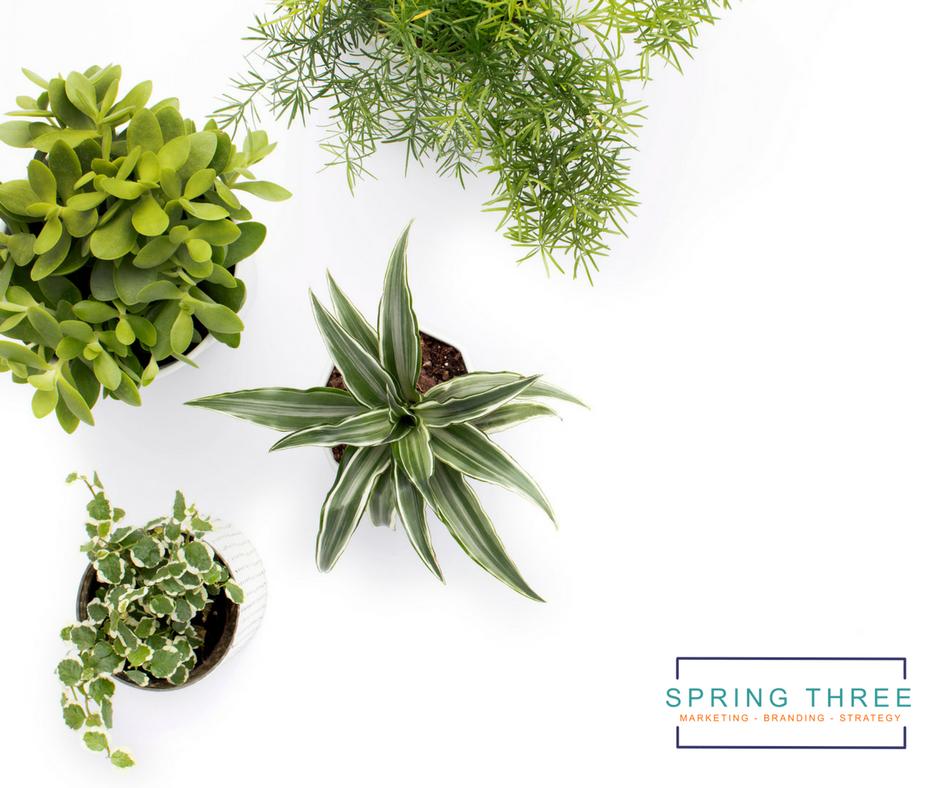 Spring Three - Marketing Tips