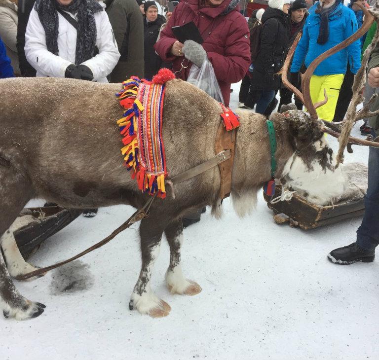 Bjuder på en bild från Jokmoks vintermarknad