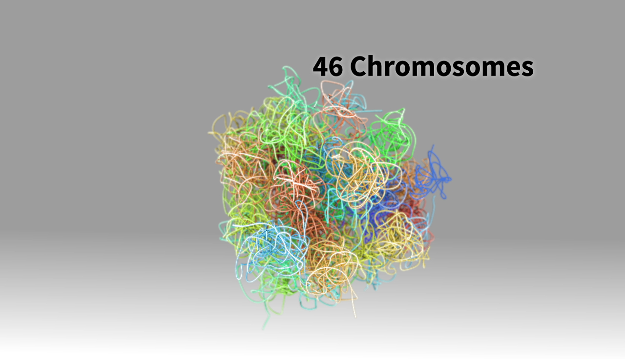 """Still from the """"What is a Chromosome?"""" project"""