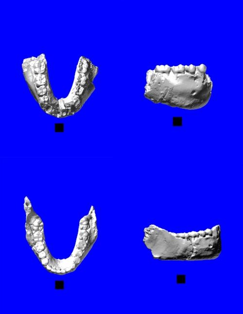 four_mandibles.jpg