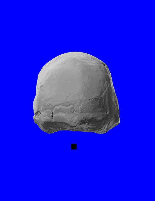 naledi_posterior_cranium_adjusted_sm.jpg