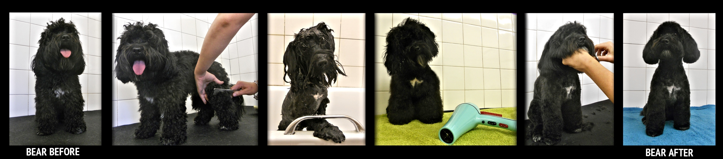 Above : Our Grooming process