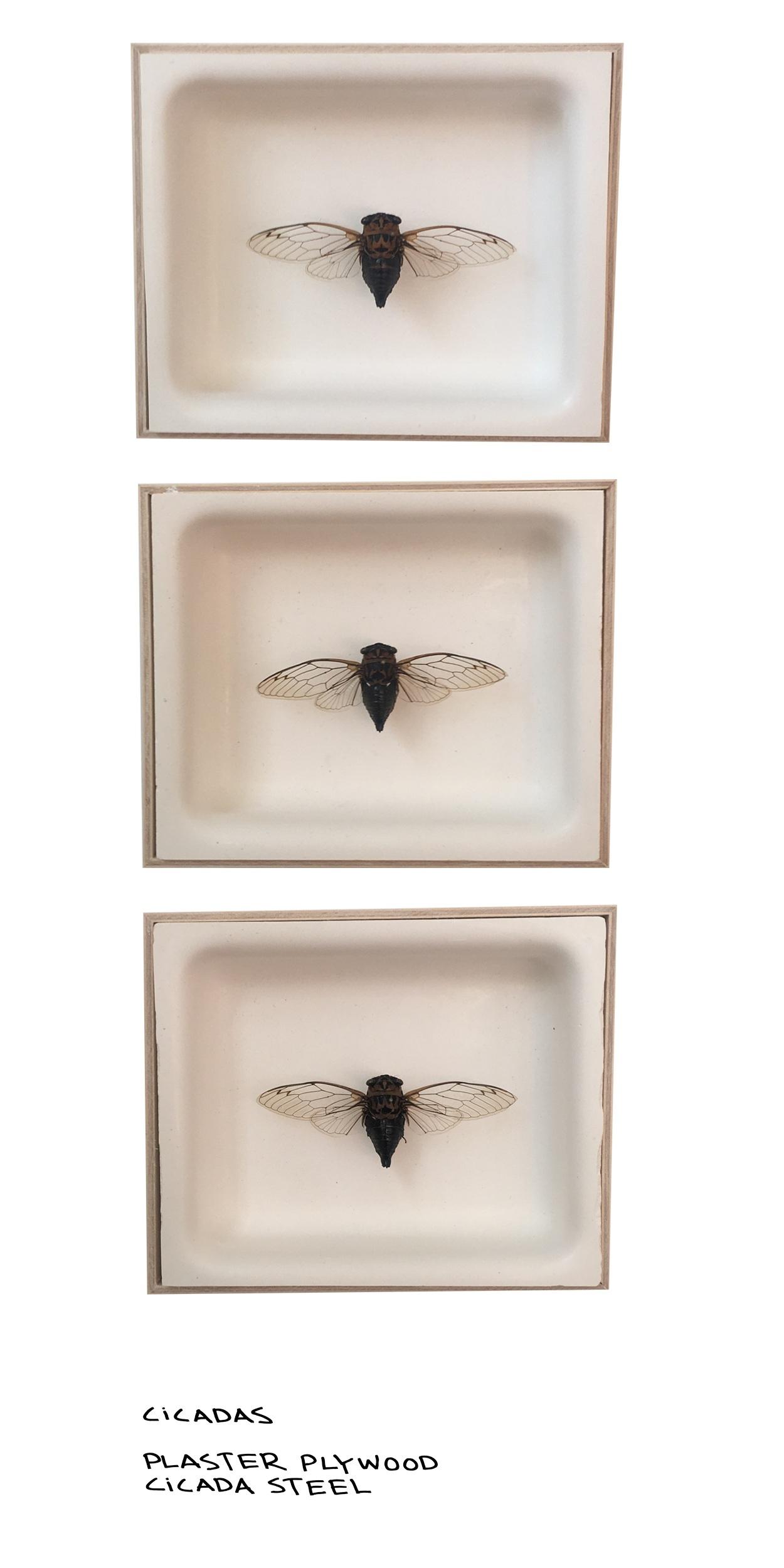 Cicada%2BSplash.jpg