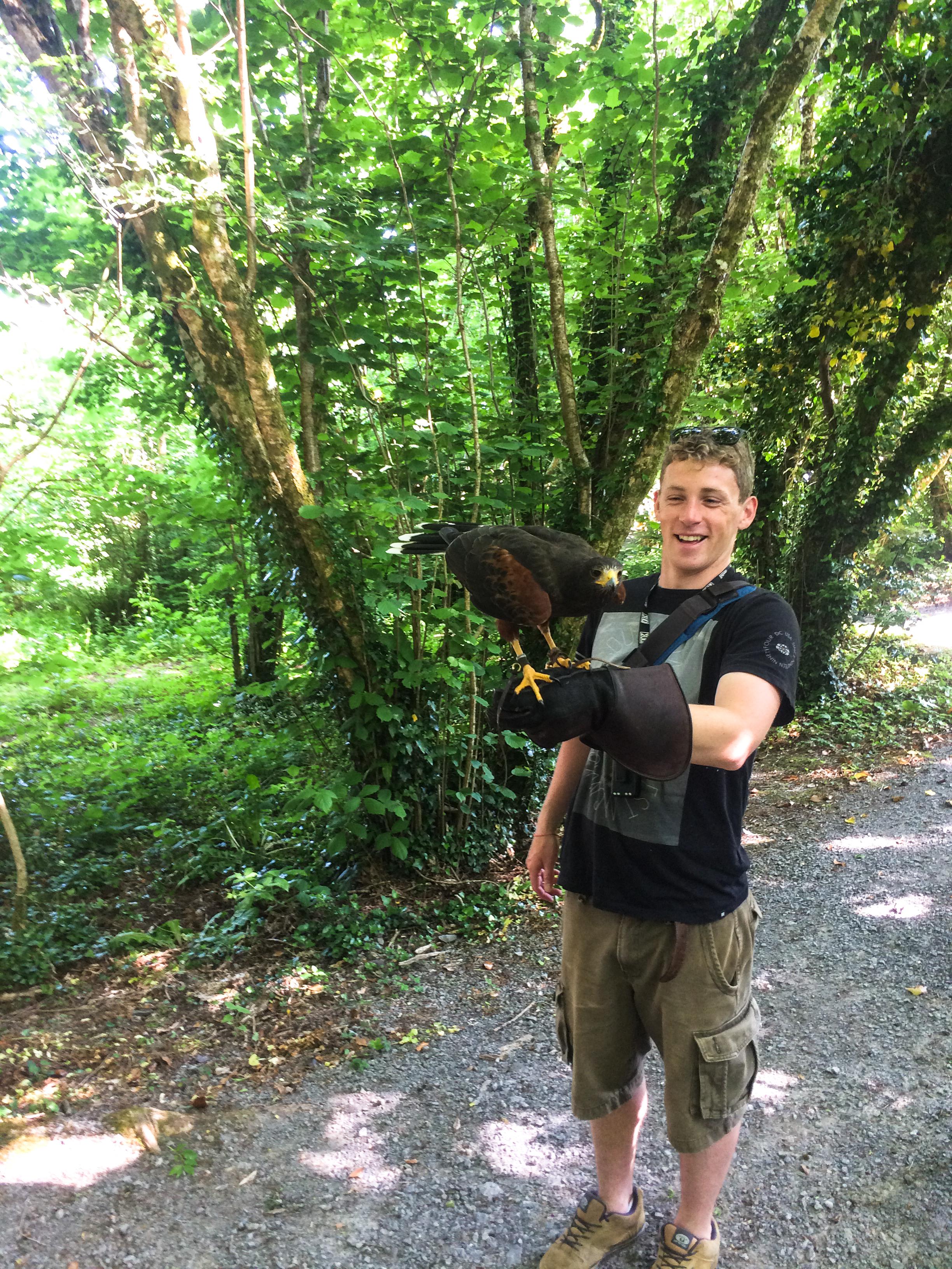 Fionn at the Burren Birds Of Prey center