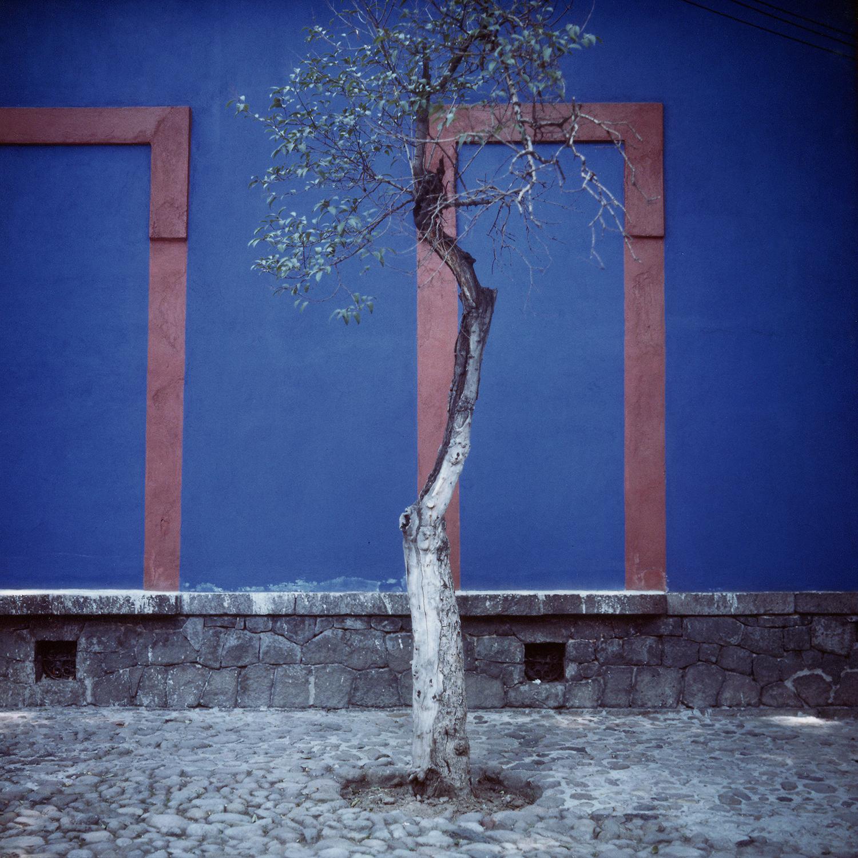Sidewalk Tree - (Frida) 1987