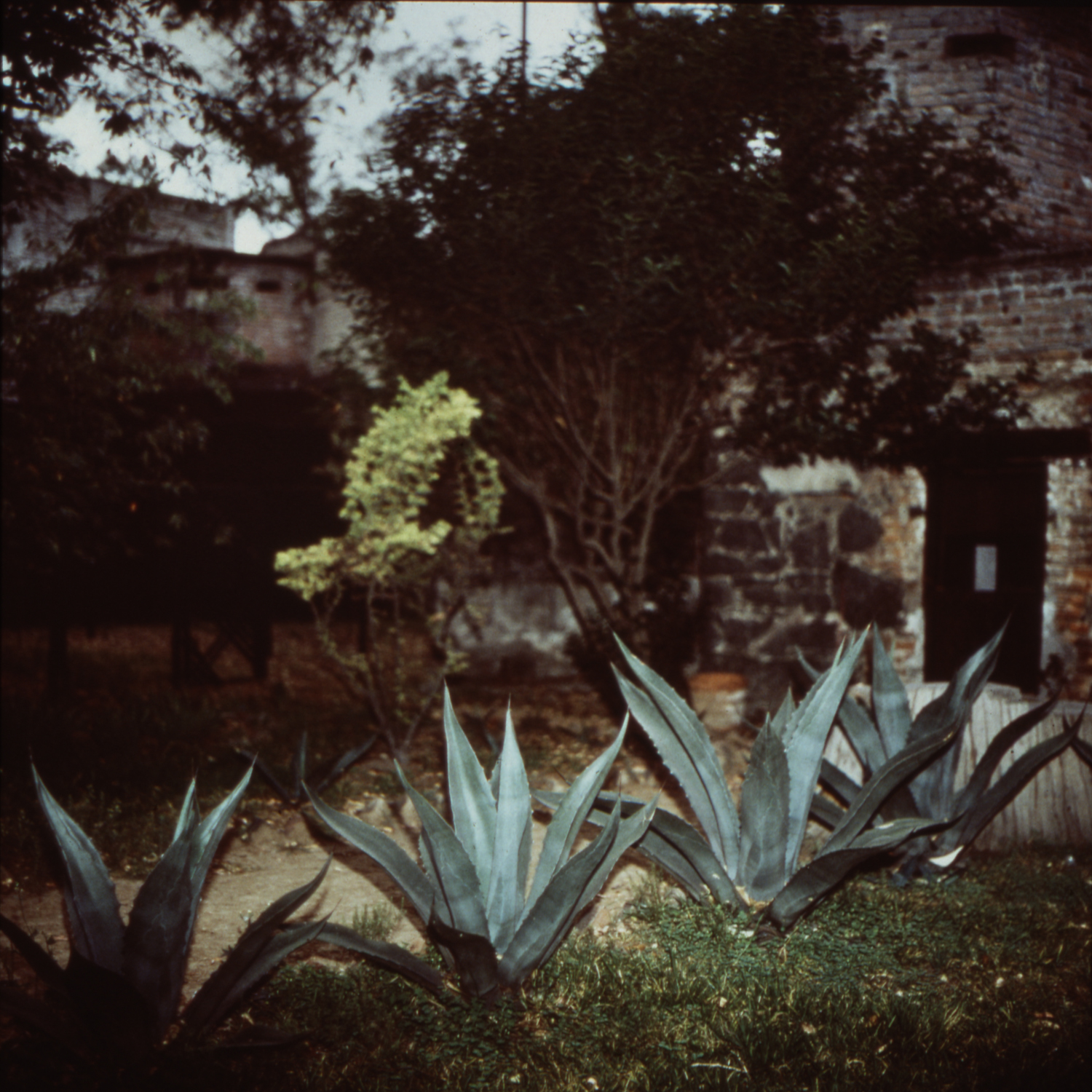 Cactus and Guard Tower - (Trotsky) 1990