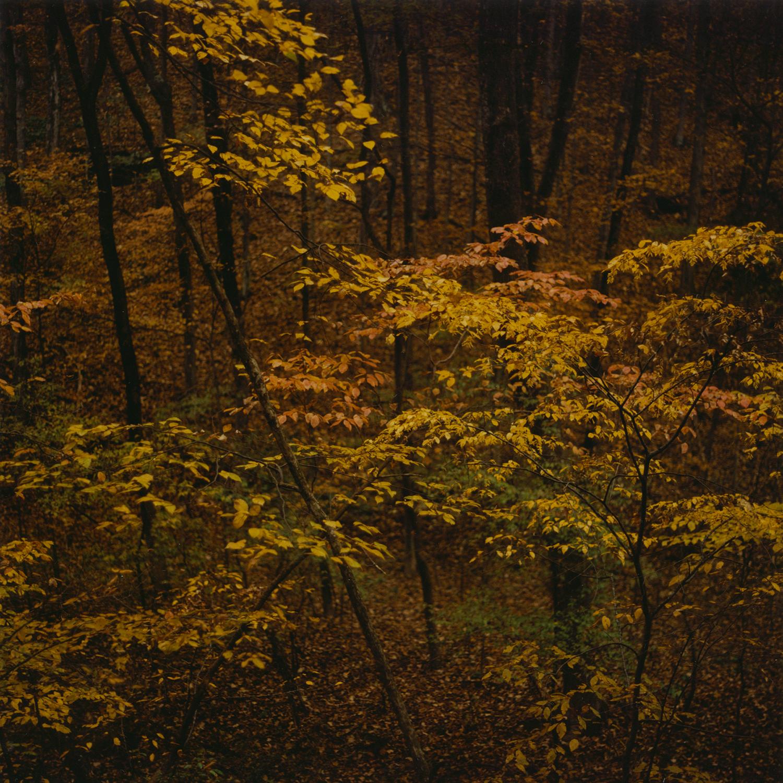 Autumn Two