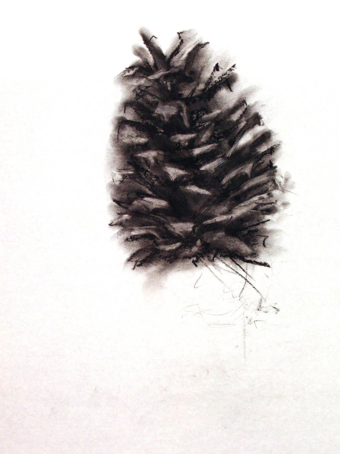 """PINE CONE     14"""" x 20"""" — Charcoal on drawing paper, 20"""" x 24"""" framed    $1200.00"""