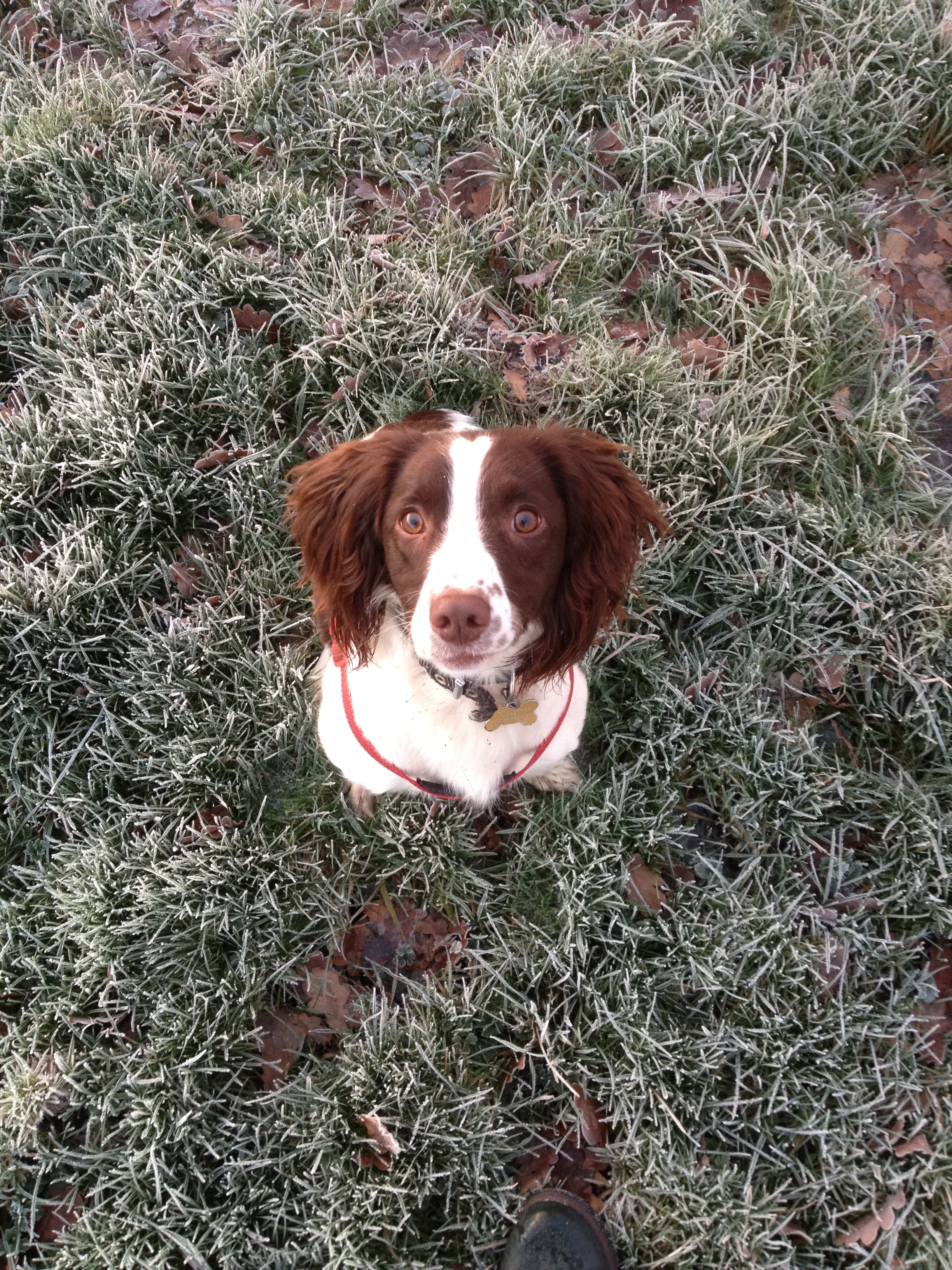 Chloe in a snowy field