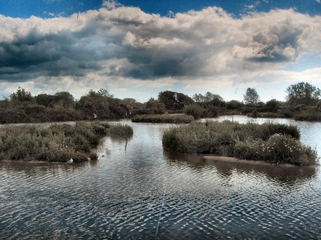 Wetland habitat in Sussex, UK