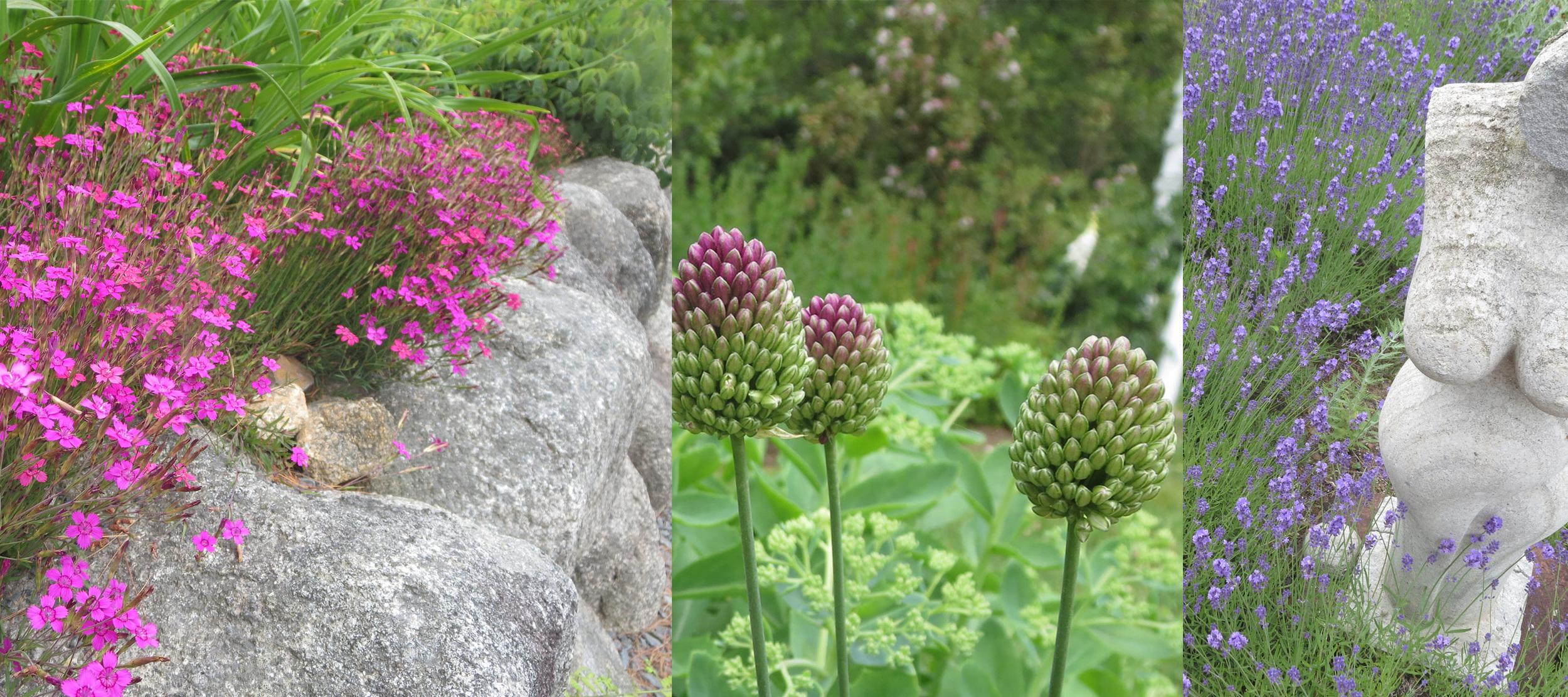 Dianthus, Allium, Lavender