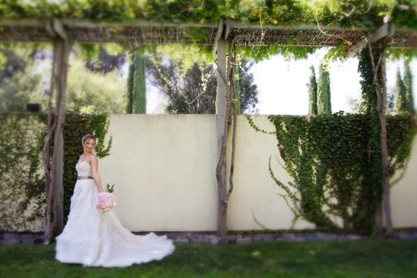 Healdsburg Country Gardens wedding 5