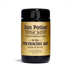 polyrachis_ant_2048x2048.jpg
