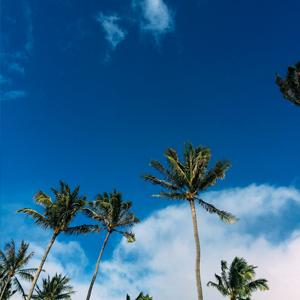 TRAVEL: CELEBRATING IN MAUI