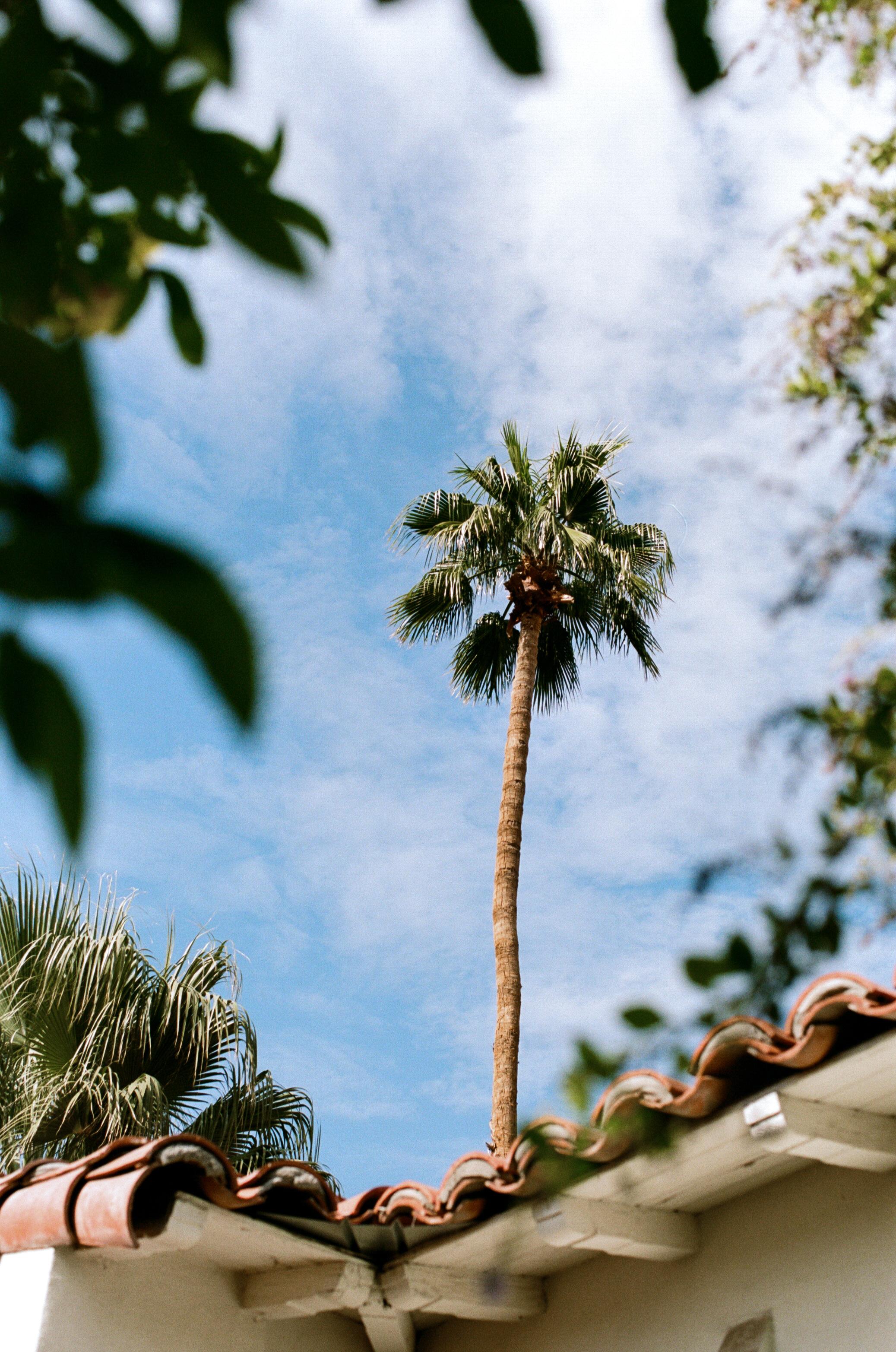 Dara_&_Garrett_Colony_Palms_Hotel_Wedding_Photos-14.jpg