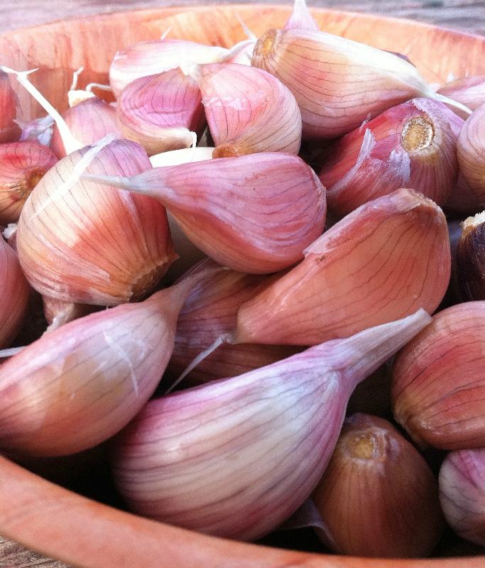 Robust Garlic Sampler