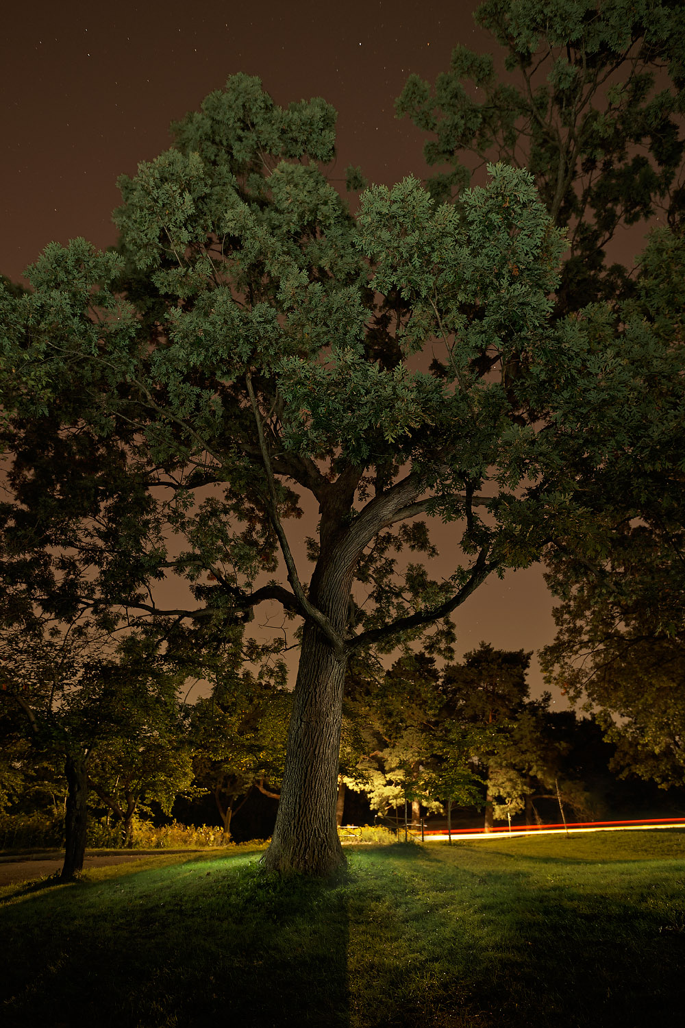 nocturnal still series   16x24 edition of 12 - $1,250   28x42 edition of 5 - starting at $2,200