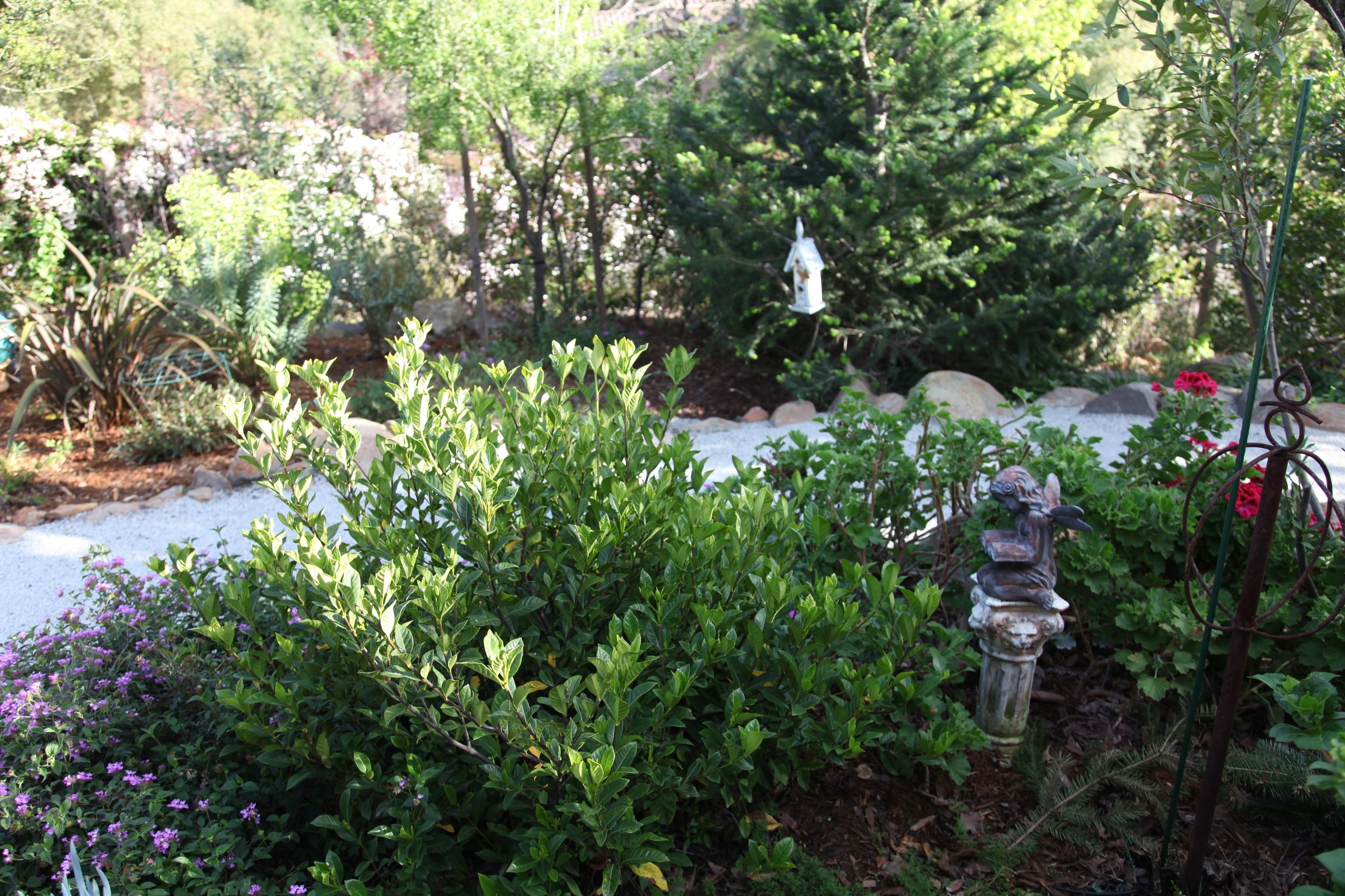 Back yard garden path.