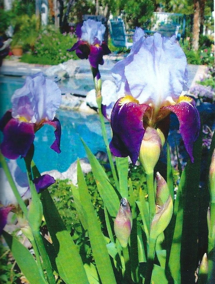 Viewing pool thru iris