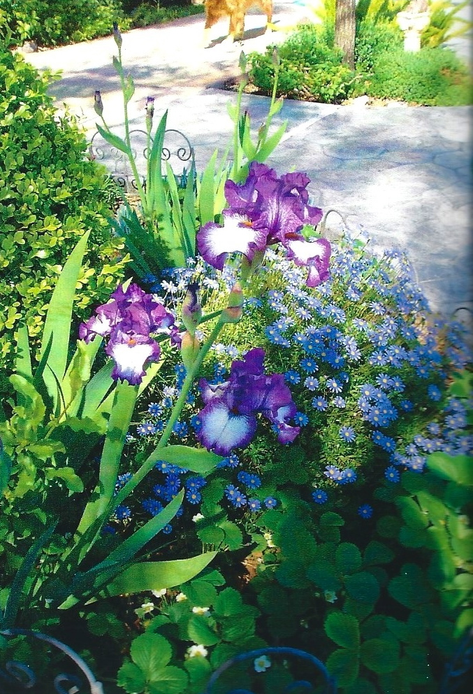 Iris set near spa for scent