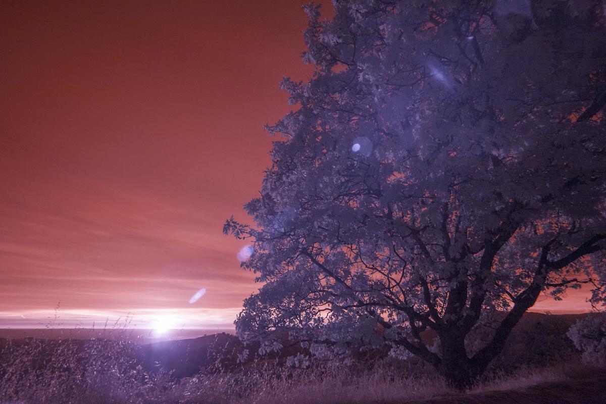 IR-sunset_6410.jpg