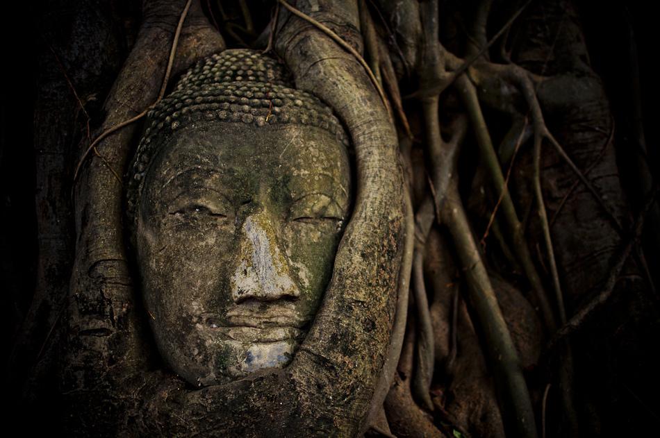 Buddha Head, Wat Mahatat : Ayutthaya, Thailandอยุธยา