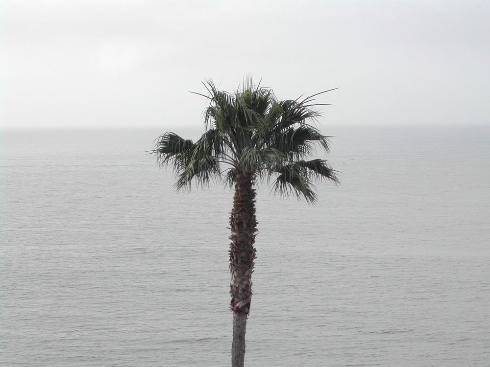 2006 Palm Tree. Malibu, CA