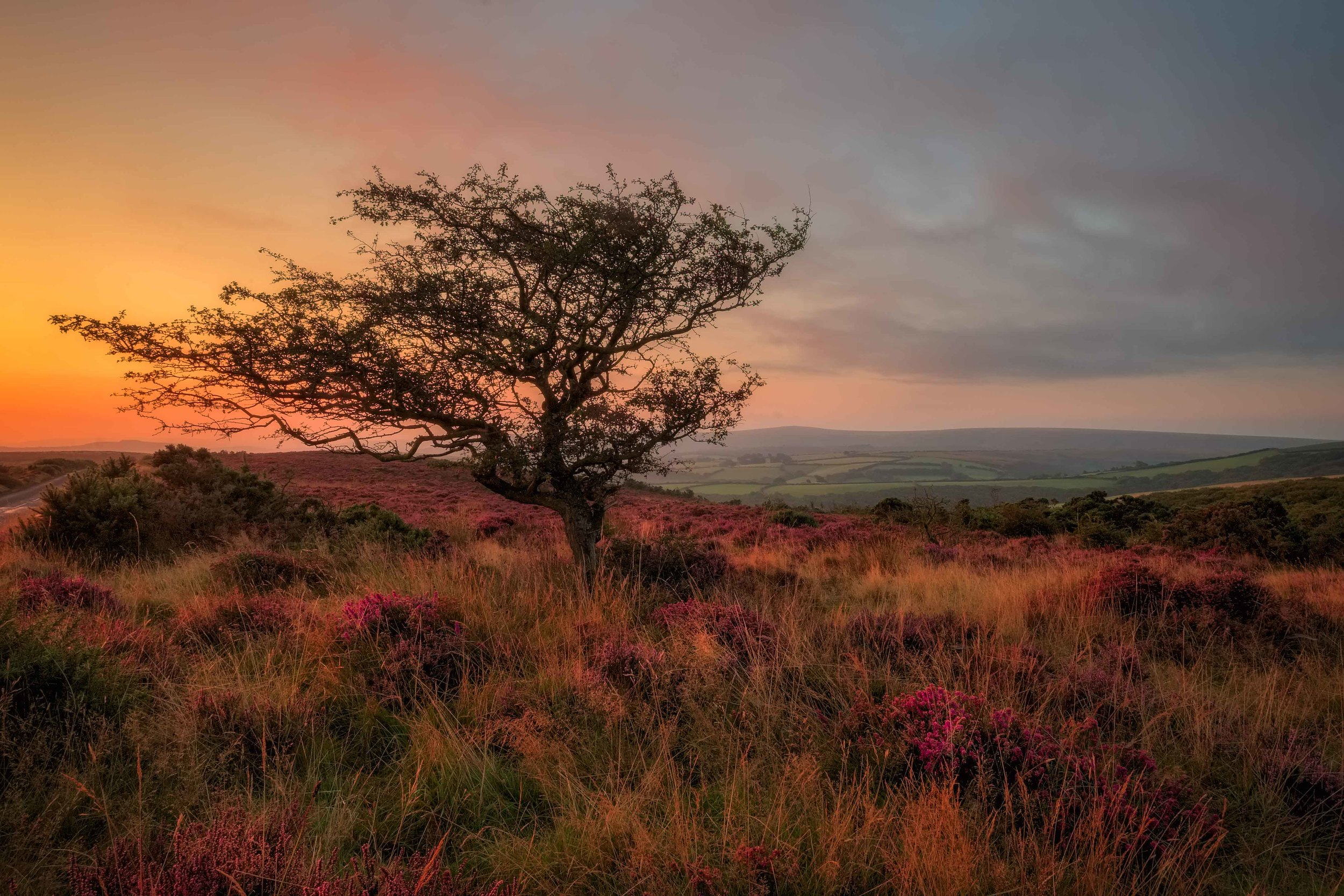Wind Weathered Tree. Exmoor. Fujifilm X-T1 + 10-24mm @ f/22. 1/10.