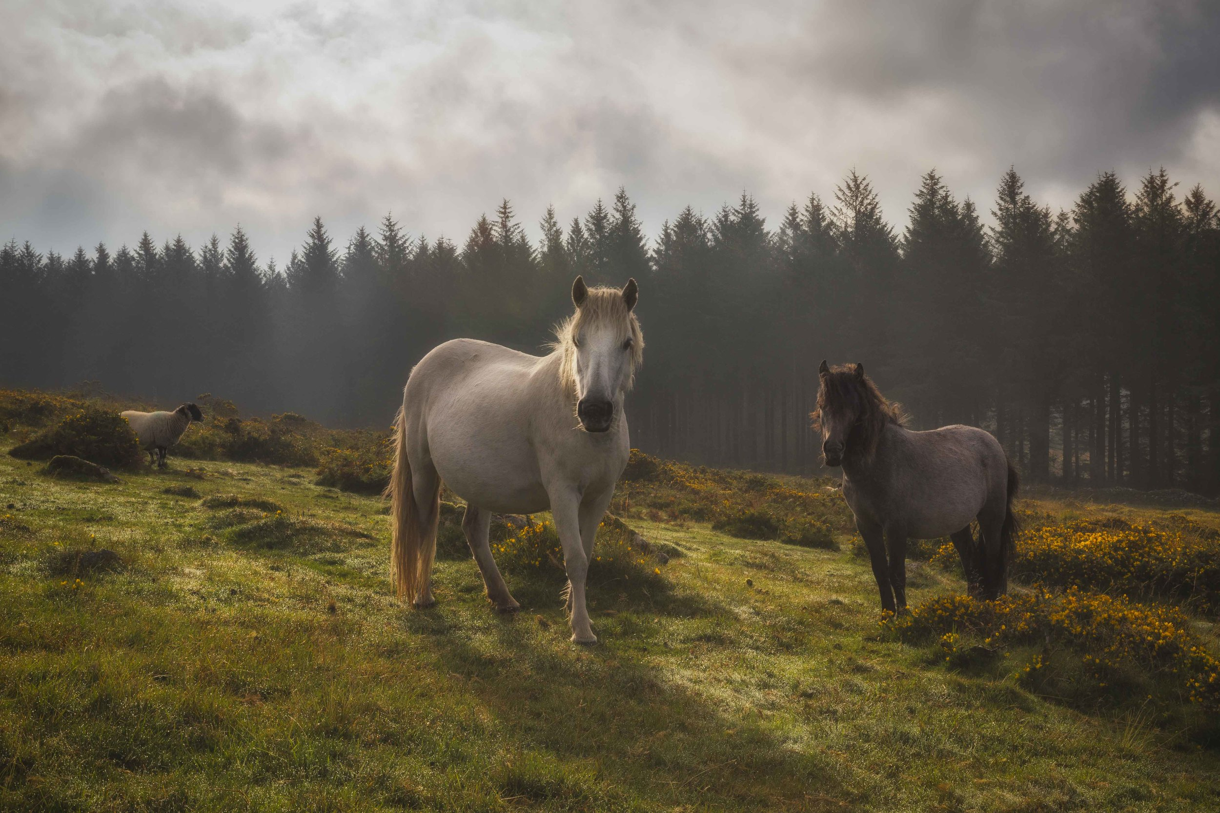 """The Watchers"" - Dartmoor, Devon, England. Canon 5D MK III + 24-70mm f/2.8 @ f/22. 1/80."