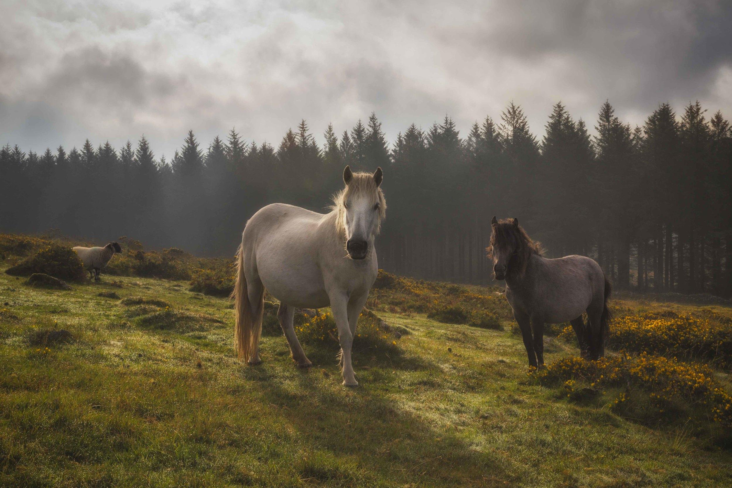 """The Watchers"" - Dartmoor, Devon, England. Canon 5D MK III + 24-70mm f/2.8 @ f/22. 1/80."