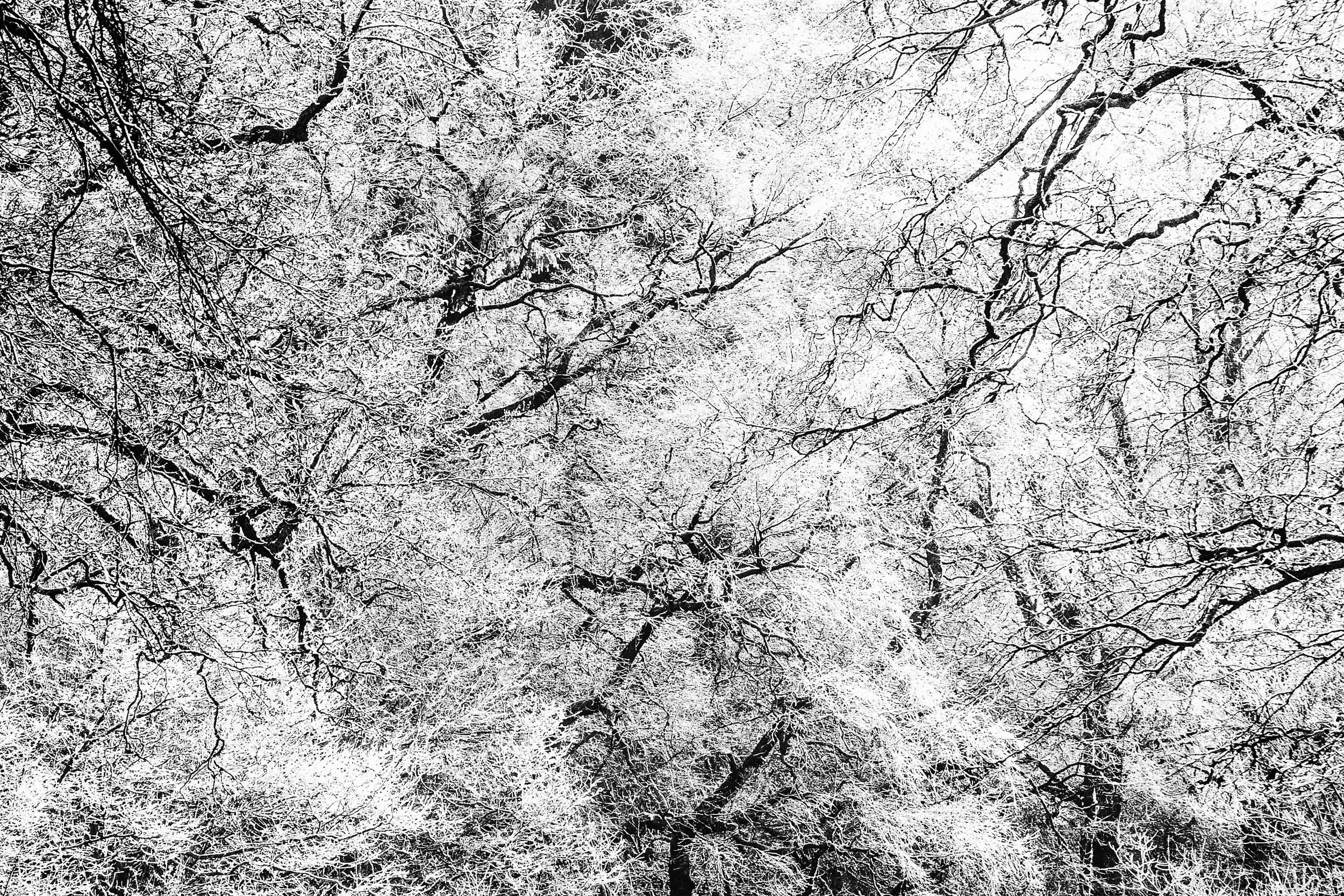 """Hoar Frost"" - Brecon Beacons, South Wales Fujifilm X-T1 + 18-135mm f/3.5 - f/5.6 @ f/13. 1/160"