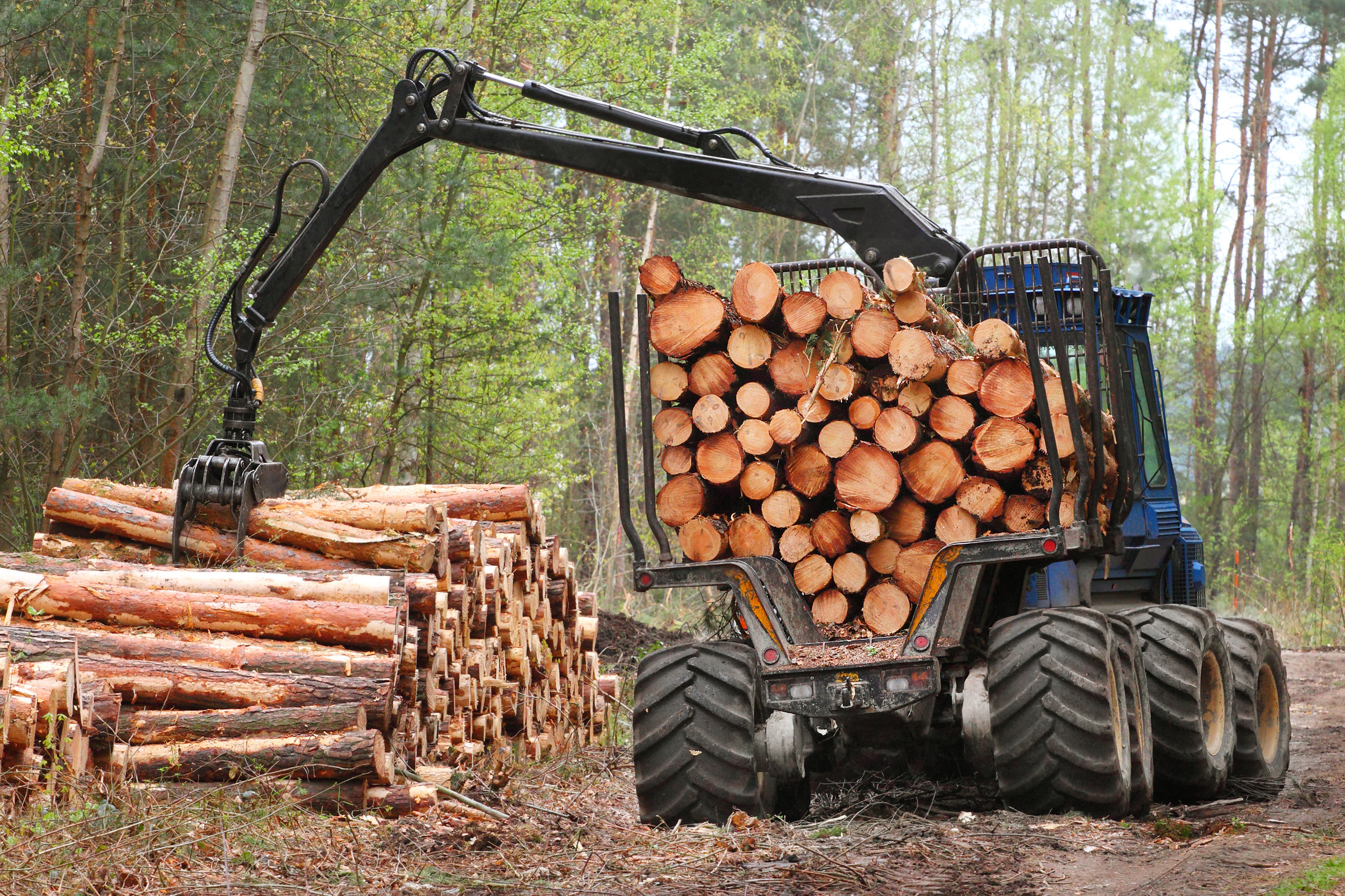 Forestry Finance