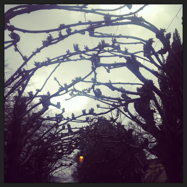 Keda Breeze Bird Cage Walk Clifton