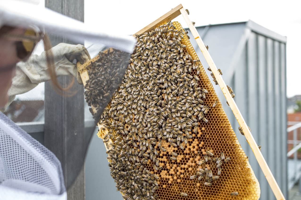 golden-girls-honey-hamburg-bienen-waben-kontrolle-1.jpg