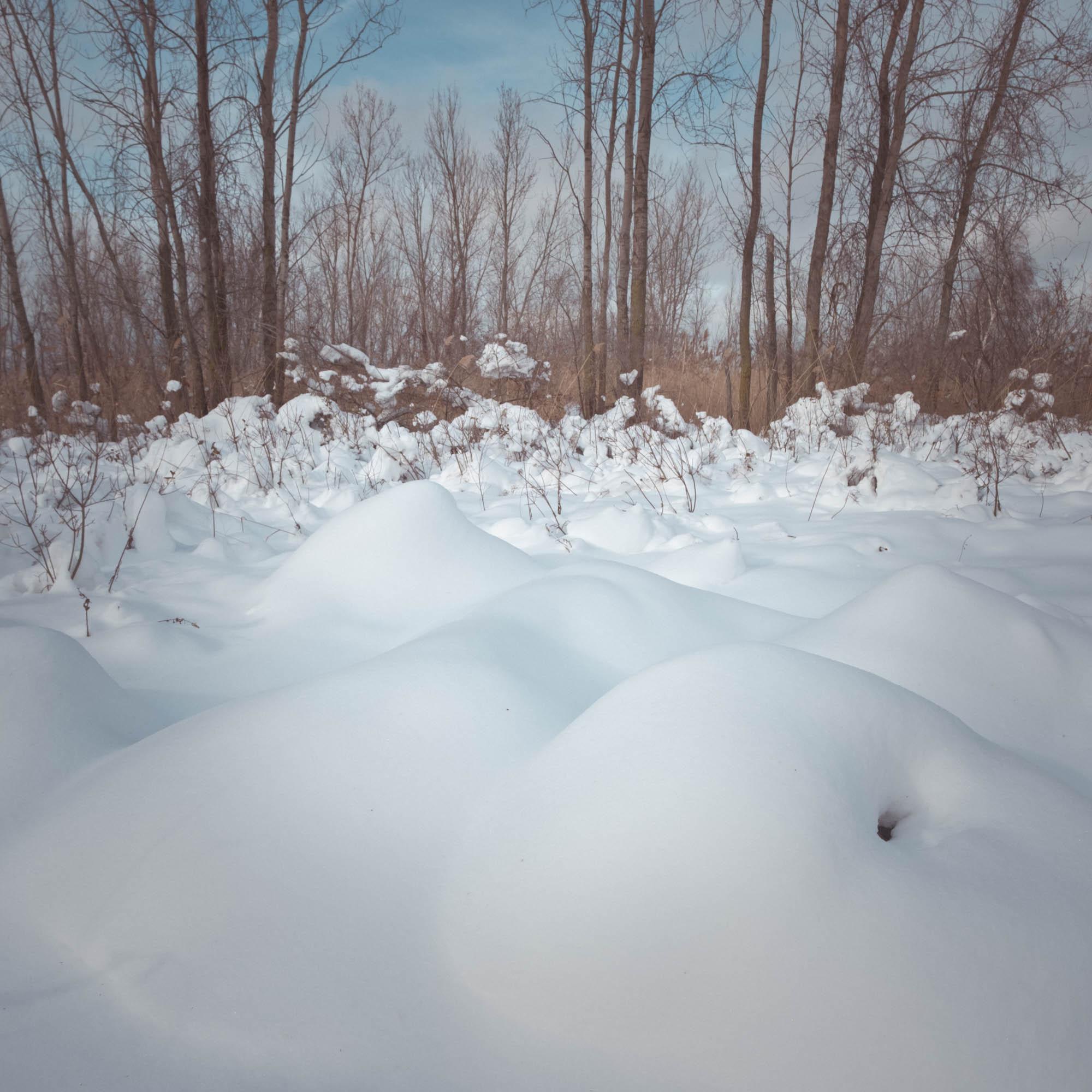 Snowy Owl-Presque Isle_1.2.18-108.jpg
