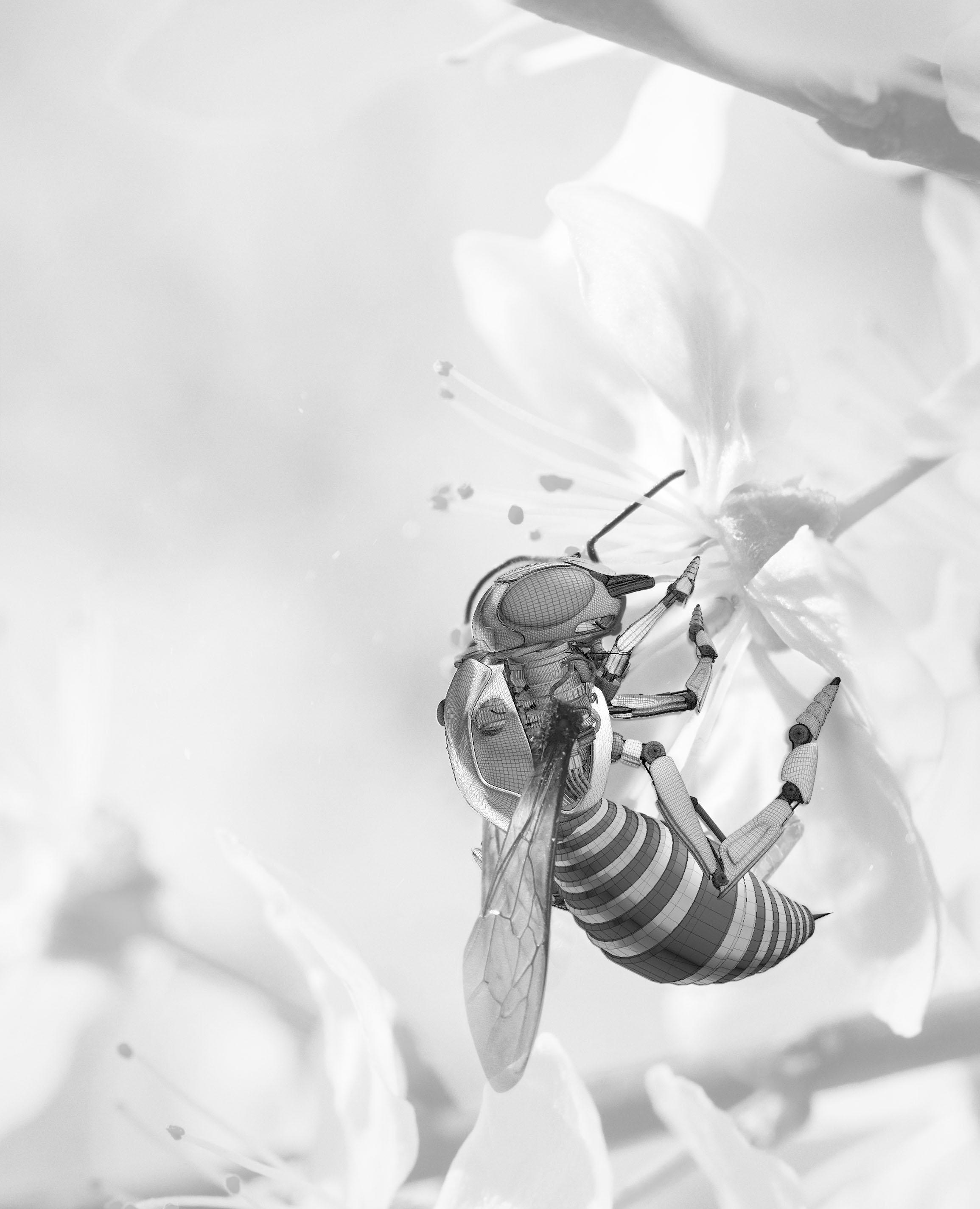 BEFORE BEE 2.jpg