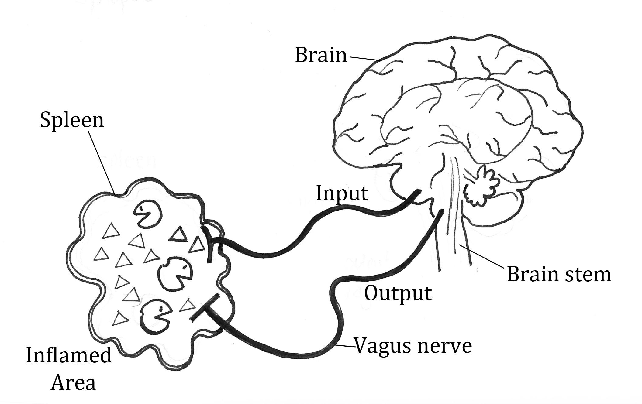 The Brain Link