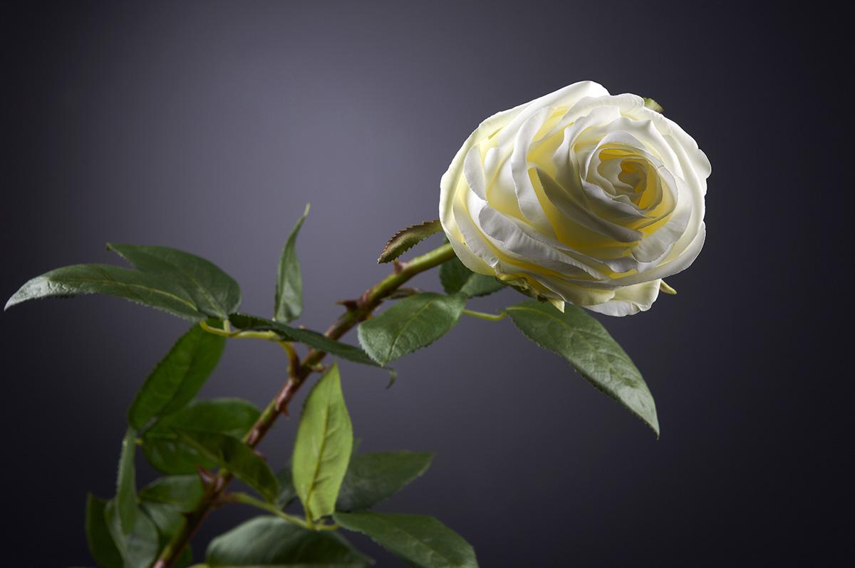 Faux roses by VG New Trend - Masha Shapiro Agency .jpg